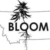 Bloom MT Marijuana Dispensary featured image