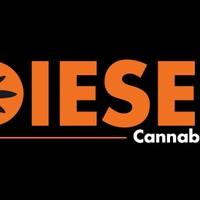 Diesel Cannabis Company Marijuana Dispensary featured image