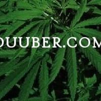 Duuber - Springfield Marijuana Dispensary featured image