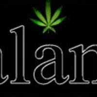Local Amsterdam Longview WA Recreational Marijuana Marijuana Dispensary featured image