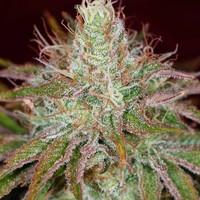 Natures Gift Shop Marijuana Dispensary featured image
