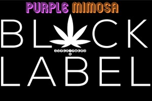 86- BLACK LABEL: PURPLE MIMOSA (Purple Punch x Mimosa) (86 Strain) (1 left)  image