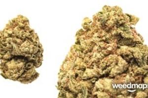 SuperGlue Marijuana Strain product image