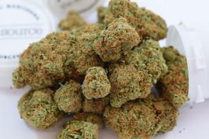 Acapulco Gold Marijuana Strain product image
