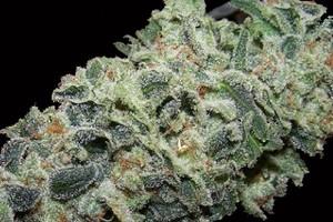 Alaskan Ice Marijuana Strain product image