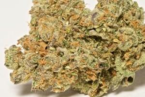 Amnesia Haze Marijuana Strain product image