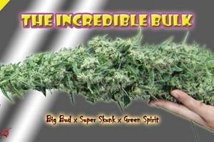 ATF Marijuana Strain product image