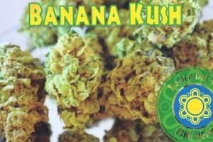 Banana Kush Marijuana Strain product image