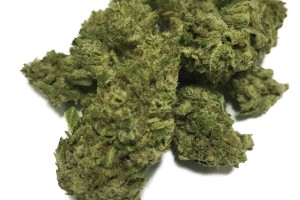 Bio-Diesel Marijuana Strain product image