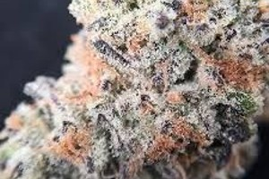 Black Cherry Soda Marijuana Strain product image
