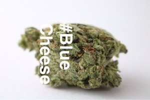 Blue Cheese Marijuana Strain product image