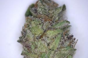 BF Blue Cheese Marijuana Strain product image
