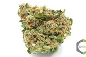 Blue Frost Marijuana Strain product image