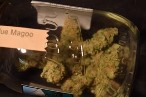 Blue Magoo Marijuana Strain product image