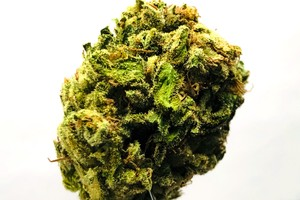 Blueberry Cookies Marijuana Strain product image