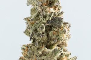 Breakfast Kush Marijuana Strain product image