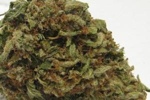 Butter OG Marijuana Strain product image