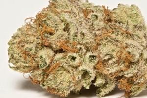 Captain's Cake Marijuana Strain product image