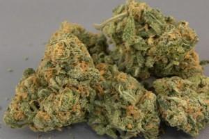 Champagne Kush Marijuana Strain product image