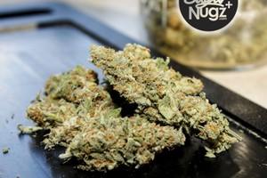 Cheese Candy Marijuana Strain product image
