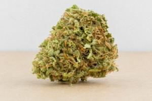 Cheese Marijuana Strain product image