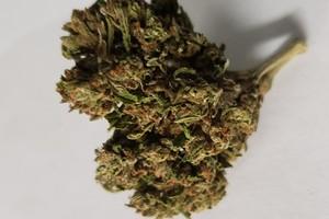Chem Scout Marijuana Strain product image