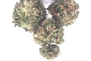 Chemdawg Sour Diesel Marijuana Strain product image