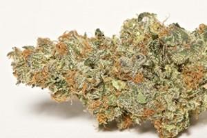 Cherry Cookies Marijuana Strain product image