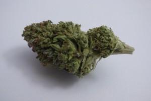 Cherry Kush Marijuana Strain product image