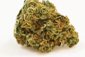 Chronic Marijuana Strain product image