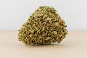 Critical Sensi Star Marijuana Strain product image