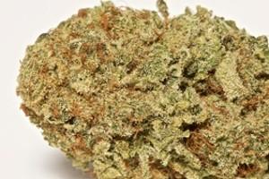 Dakini Kush Marijuana Strain product image