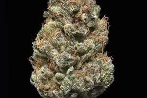 Deadhead OG Marijuana Strain product image