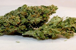 Ghost Train Haze Marijuana Strain product image