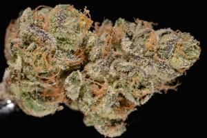 Girl Scout Cookies Marijuana Strain product image