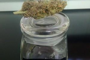 Gorilla Glue Marijuana Strain product image