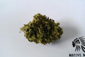 Grape Stomper Marijuana Strain product image