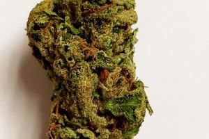 Green Crack Marijuana Strain product image