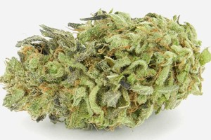 Green Poison Marijuana Strain product image
