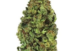 GSC    Marijuana Strain product image