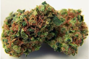 Hawaiian Diesel Marijuana Strain product image