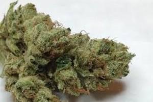 Hippie Crippler Marijuana Strain product image