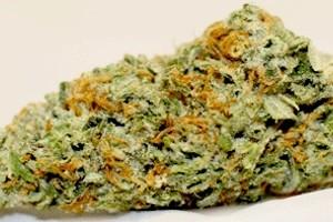 Holy Grail Marijuana Strain product image