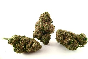 Jack the Ripper Marijuana Strain product image
