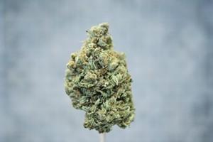 Jedi Kush Marijuana Strain product image