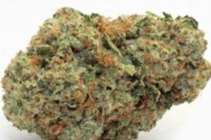 Key Lime Pie Marijuana Strain product image