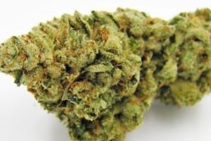 Lemon Cake Marijuana Strain product image