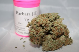 Barbara Bud Marijuana Strain product image