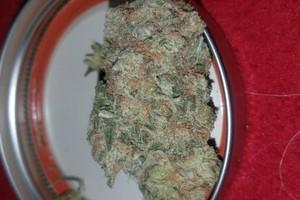 Mango Haze Marijuana Strain product image