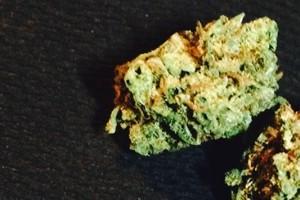 Mickey Kush Marijuana Strain product image